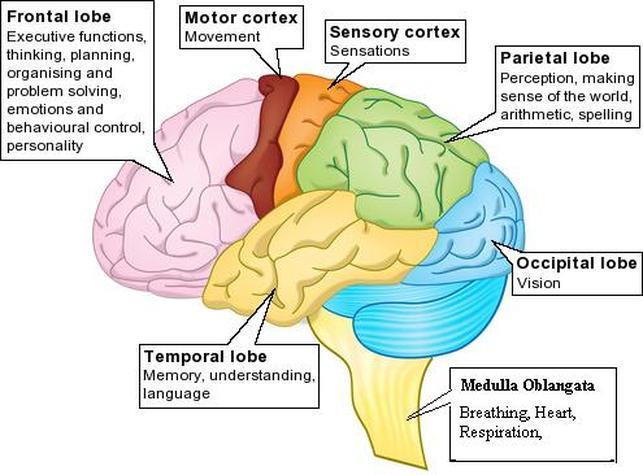Psychology lakshman madurasinghe brain ccuart Gallery