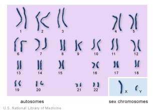 chromosomes..autosomes